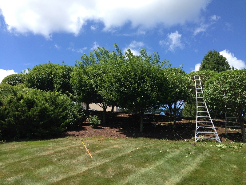 Fairfield County Connecticut Tree Pruning Solutions